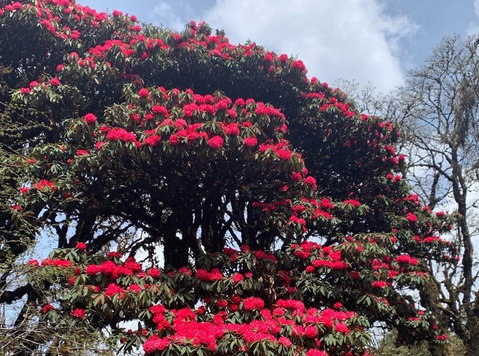 Rhododendron Festival Tour - Overig