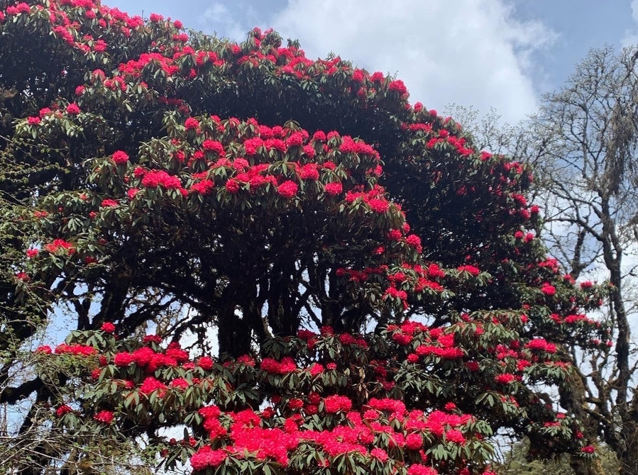 Rhododendron Festival Tour - Services: Other
