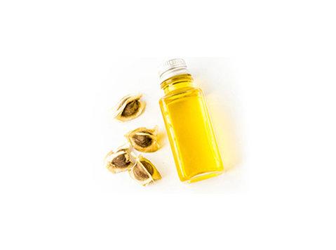 100% pure Organic Moringa Seed Oil   Moringa Wholesale - Muu