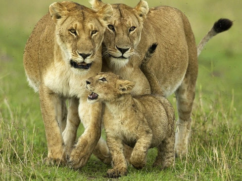 Best Kenya Tanzania Safari Deals - Останато