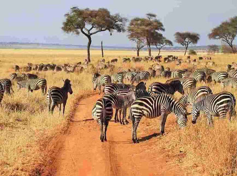 Budget Kenya Safari Tours & Trips - Services: Other