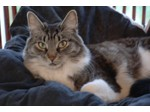 Cat Hotel, boarding cattery in Luxembourg - Pets/Animals