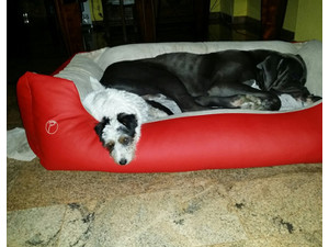 Dogsitting - אחר