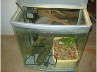 Fish Tank incl. accessories For Sale - Buy & Sell: Other