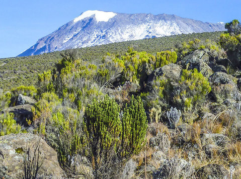 Kilimanjaro trekking private booking Lemosho route 8 days - Viagens/Caronas