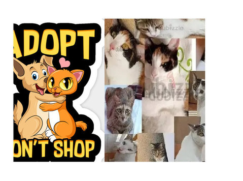 Healthy,gorgues kittys for adoption only to great home - Pets/Animals