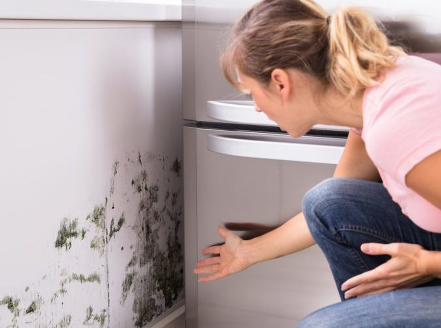 Mold Removal Express Colorado Springs - Cleaning