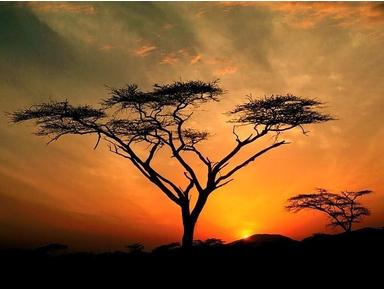 africa vacation holidays - Travel Agencies