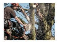 Glen Isla Tree Climbers (1) - Gardeners & Landscaping