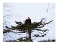 Glen Isla Tree Climbers (2) - Gardeners & Landscaping