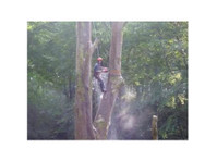 Glen Isla Tree Climbers (3) - Gardeners & Landscaping