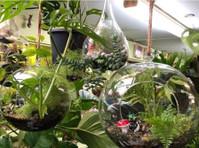 Northroy Nursery (1) - Home & Garden Services