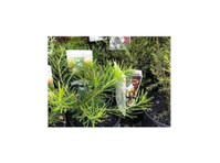 Northroy Nursery (2) - Home & Garden Services