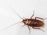 Pro Pest Control Sydney (2) - Property inspection