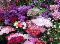 Camberwell Florist (1) - Shopping