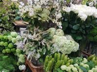 Camberwell Florist (2) - Shopping