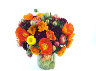 Camberwell Florist (3) - Shopping