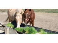 Southern Cross Feeds (1) - Pet services