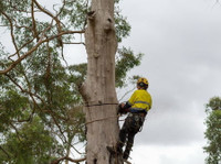 Black Forest Tree Service (1) - Gardeners & Landscaping