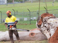 Black Forest Tree Service (2) - Gardeners & Landscaping