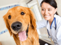 Redgum Vet & Pet Boarding (1) - Pet services
