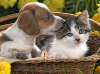 Redgum Vet & Pet Boarding (3) - Pet services