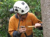 Balanced Tree Management (1) - Home & Garden Services