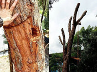 Balanced Tree Management (3) - Home & Garden Services