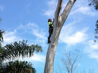 Affordable Dan's Tree Removal Sydney (2) - Gardeners & Landscaping