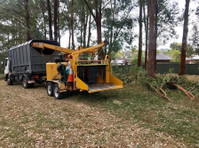 Affordable Dan's Tree Removal Sydney (3) - Gardeners & Landscaping