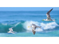 Byron Bay Accommodation Rentals - Beach House Rentals (3) - Accommodation services