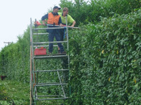 Same Day Tree Works (1) - Gardeners & Landscaping