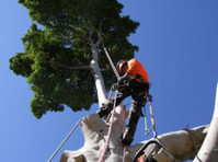 Same Day Tree Works (2) - Gardeners & Landscaping