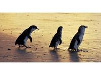 Wildlife Tours Australia (2) - Travel sites