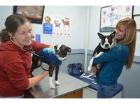South Eastern Vet - Veterinary Hospital Clayton (2) - Pet services