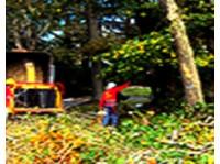 tree service New York long island (2) - Home & Garden Services