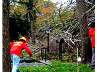 tree service New York long island (3) - Home & Garden Services