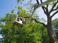 Benton Tree Services (1) - Home & Garden Services
