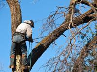 Benton Tree Services (2) - Home & Garden Services