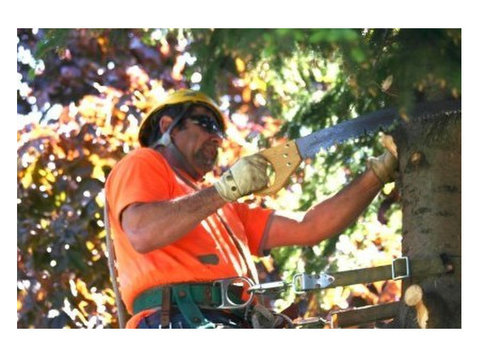 Memphis Tree Removal - Gardeners & Landscaping