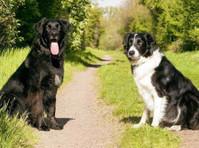 Grasslands Canine Development Centre (2) - Pet services