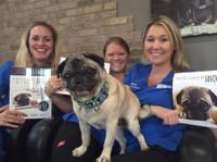 Oak West Animal Clinic (1) - Pet services