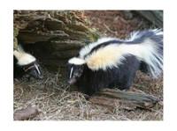 Habitat Wildlife Control (1) - Home & Garden Services
