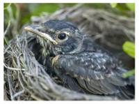 Habitat Wildlife Control (2) - Home & Garden Services