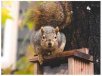 Habitat Wildlife Control (3) - Home & Garden Services