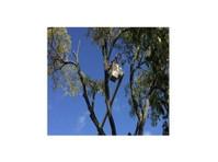 Van Till Tree Care (3) - Gardeners & Landscaping