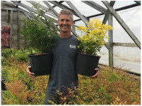 Brentwood Grounds Maintenance (2) - Gardeners & Landscaping
