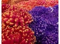 King West Flowers (1) - Gardeners & Landscaping