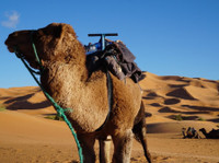 Morocco View (1) - Travel Agencies