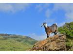 Cyprus EcoTour Adventures (4) - Reiseseiten